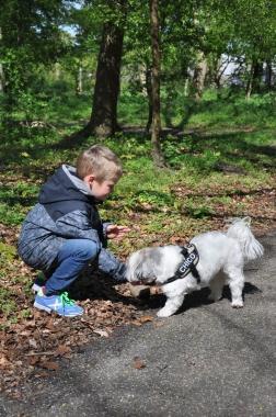 Hoe geef je een brokje aan een hond?