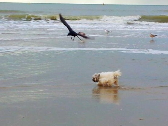 Snuffelen op het strand. Wat een hoop geuren zijn hier te vinden.