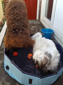 Honden bij warm weer.